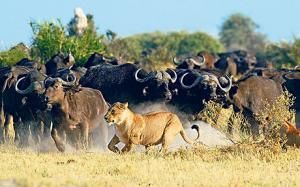 The Best Safaris In Africa Africa And Wilderness - 10 best safaris in africa
