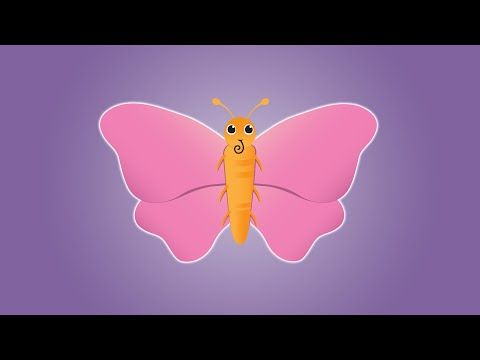 Butterfly Life Cycle Videos For Kids Simply Kinder