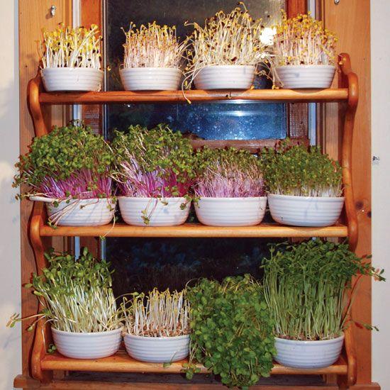 Tips For Indoor Gardening: Grow A Year-Round Indoor Salad Garden