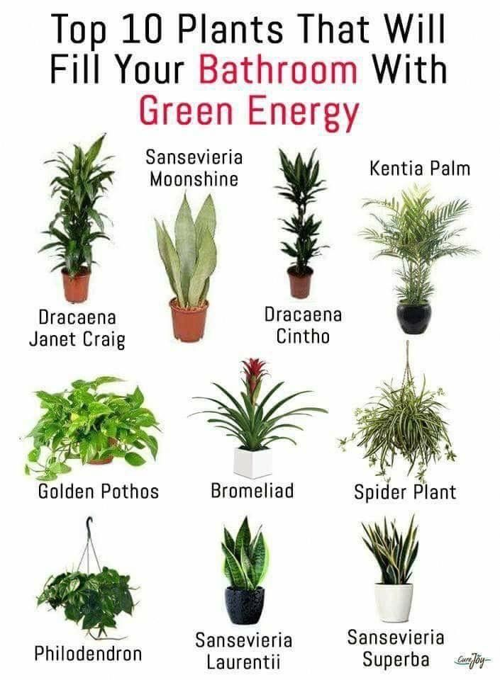 Idea By Living Simply With Dee On Home In 2020 Plants Best