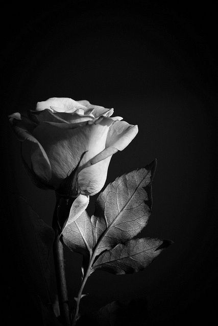 صباح الخير Good Morning Black And White Roses Black And White Aesthetic Black Aesthetic Wallpaper