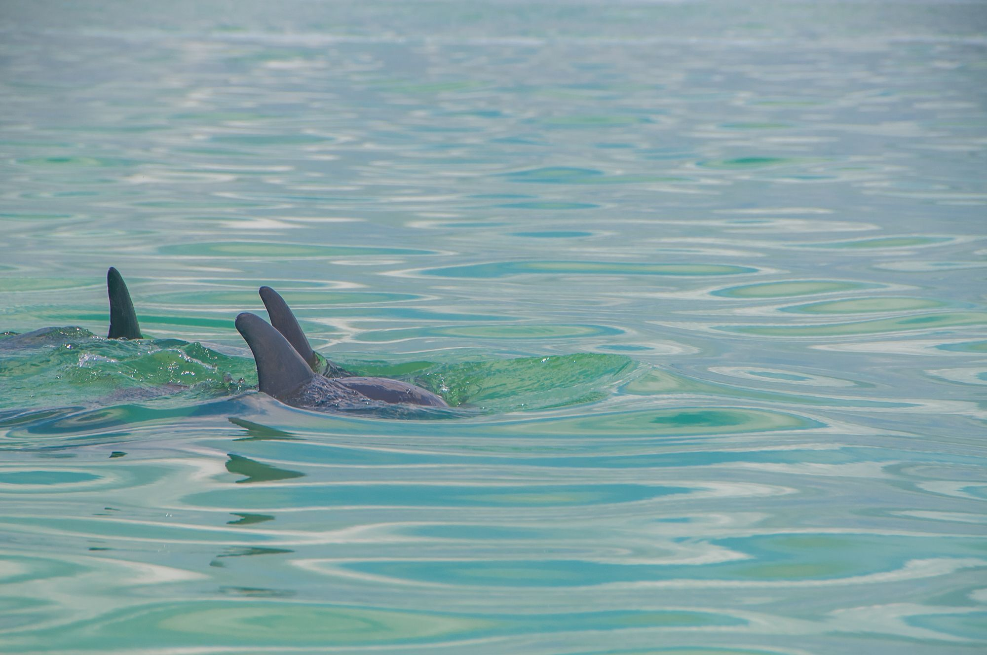 a magical moment in the sian ka an biosphere reserve on a boat trip