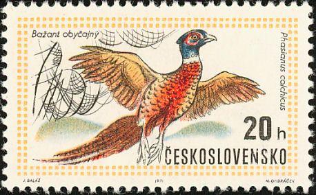 Birds on stamps: Czechoslovakia, Common Pheasant Phasianus colchicus ,1971