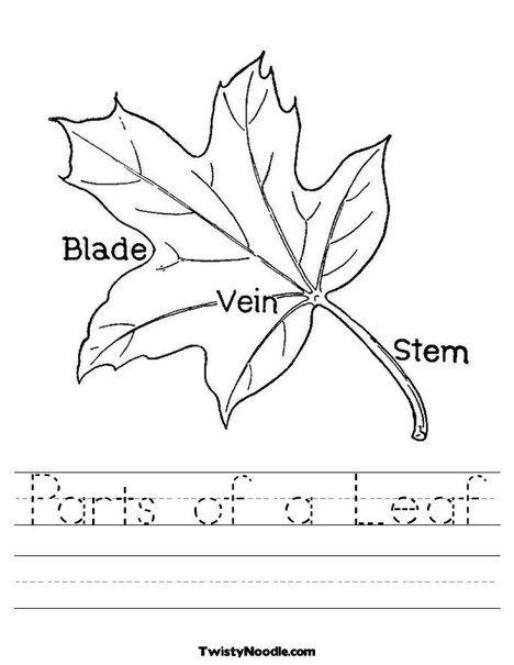 L Is For Leaf Leaf With Veins Worksheet Leaf Coloring Page