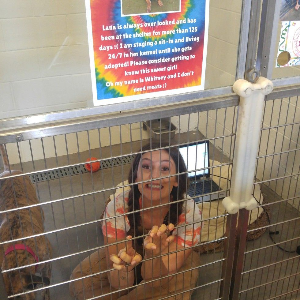 Shelter Worker Vows To Live In Kennel With Dog Until She S Adopted