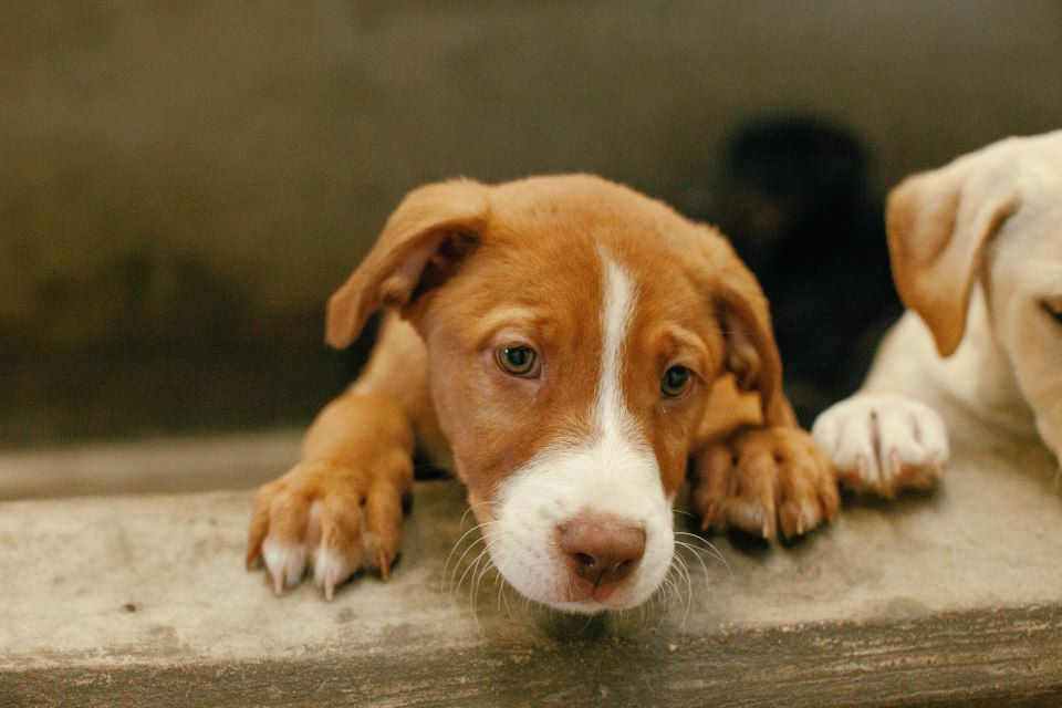 GONE PUPPY on DEATH ROW DON´T HESITATE, THEY KILL