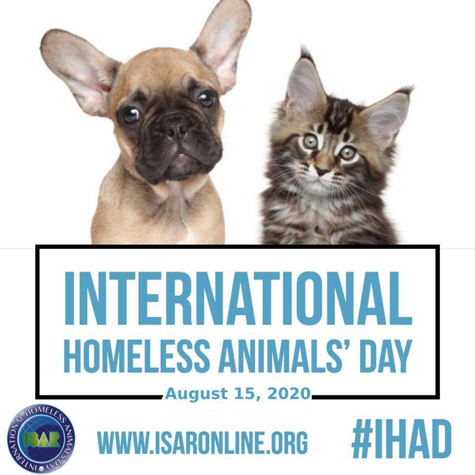 Ihad 2020 Saturday August 15 2020 In 2020 Pet Day Animals Pet Parent