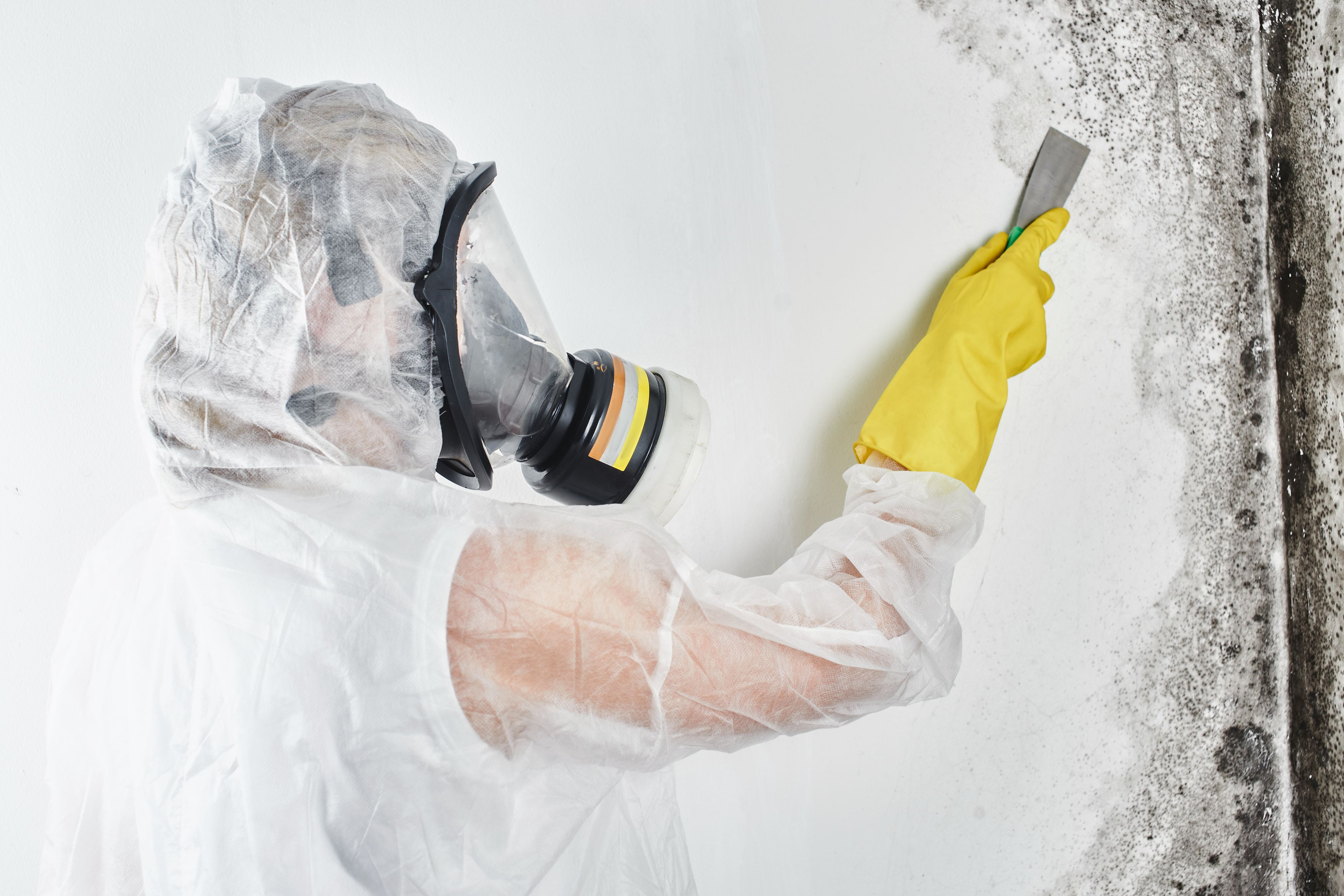 Pin on Mold Removal Services