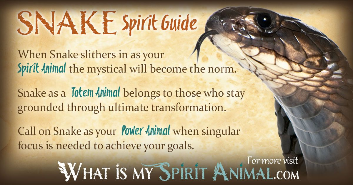 Snake Symbolism Meaning Power Animal American Symbols And Totems