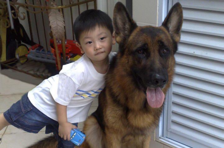 Dog Training Courses Dog Training