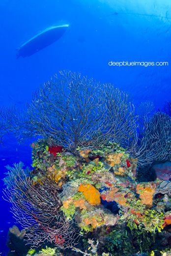 Boat Dive Trips On Grand Cayman's Wall #underwaterphotos