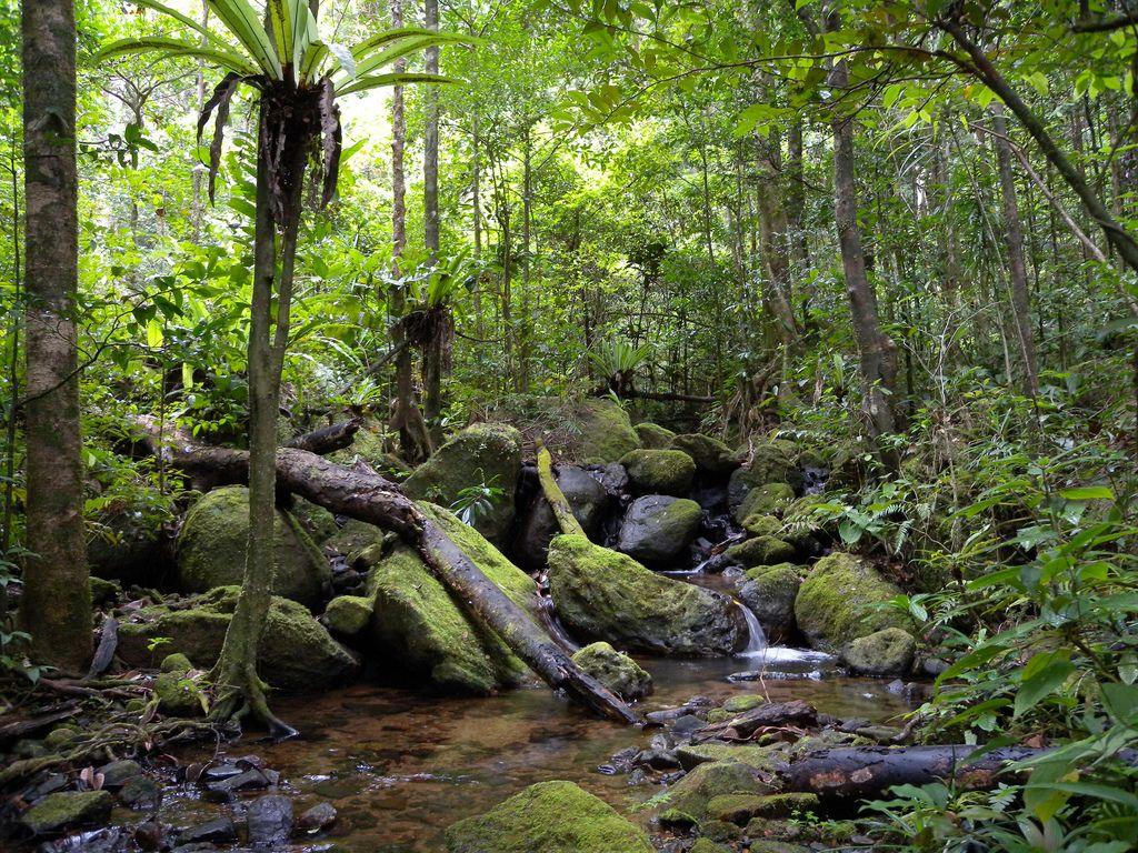 Top 10 geographical places in africa congo africa and madagascar congo rainforest congo rainforest located in central africa is the second largest on sciox Image collections
