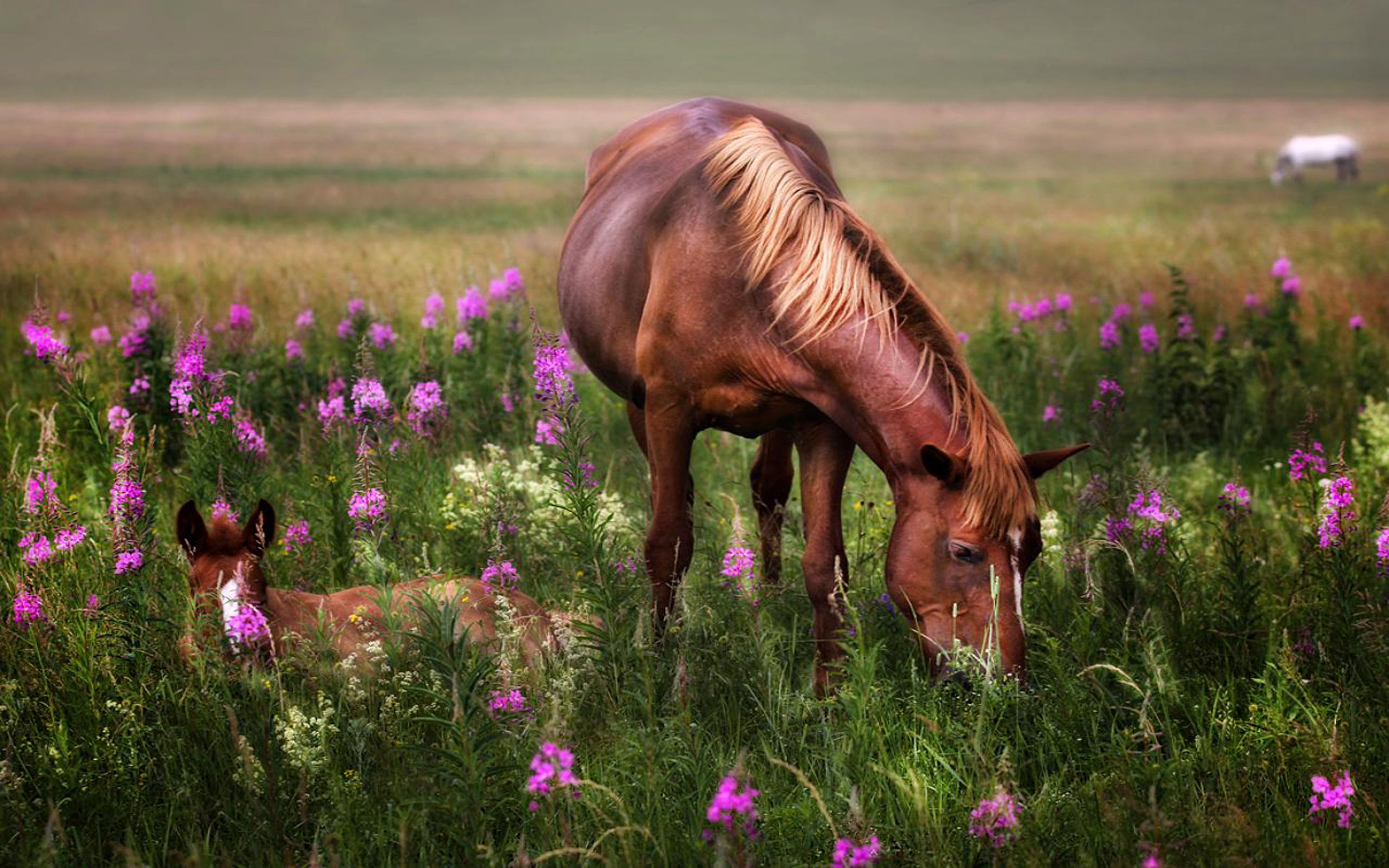 Amazing Wallpaper Horse Rose - ab243f7c3657986e2e8986158061f679  Image_3853.jpg