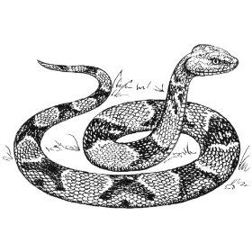 275 inch x 2 inch acrylic keyring line drawing copperhead snake for tino