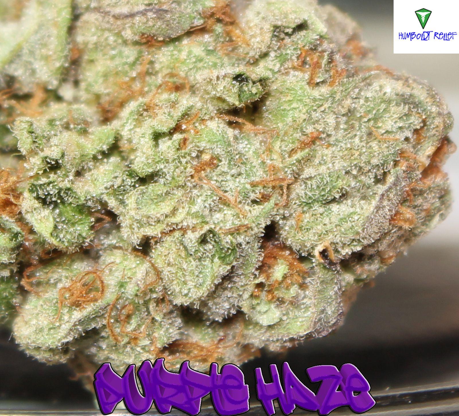Is Weed Purple Haze Marijuana This is what Zip Grinders were made for!