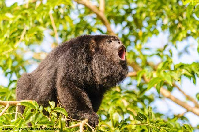Amazon Rainforest Monkeys Pictures, Facts & Information