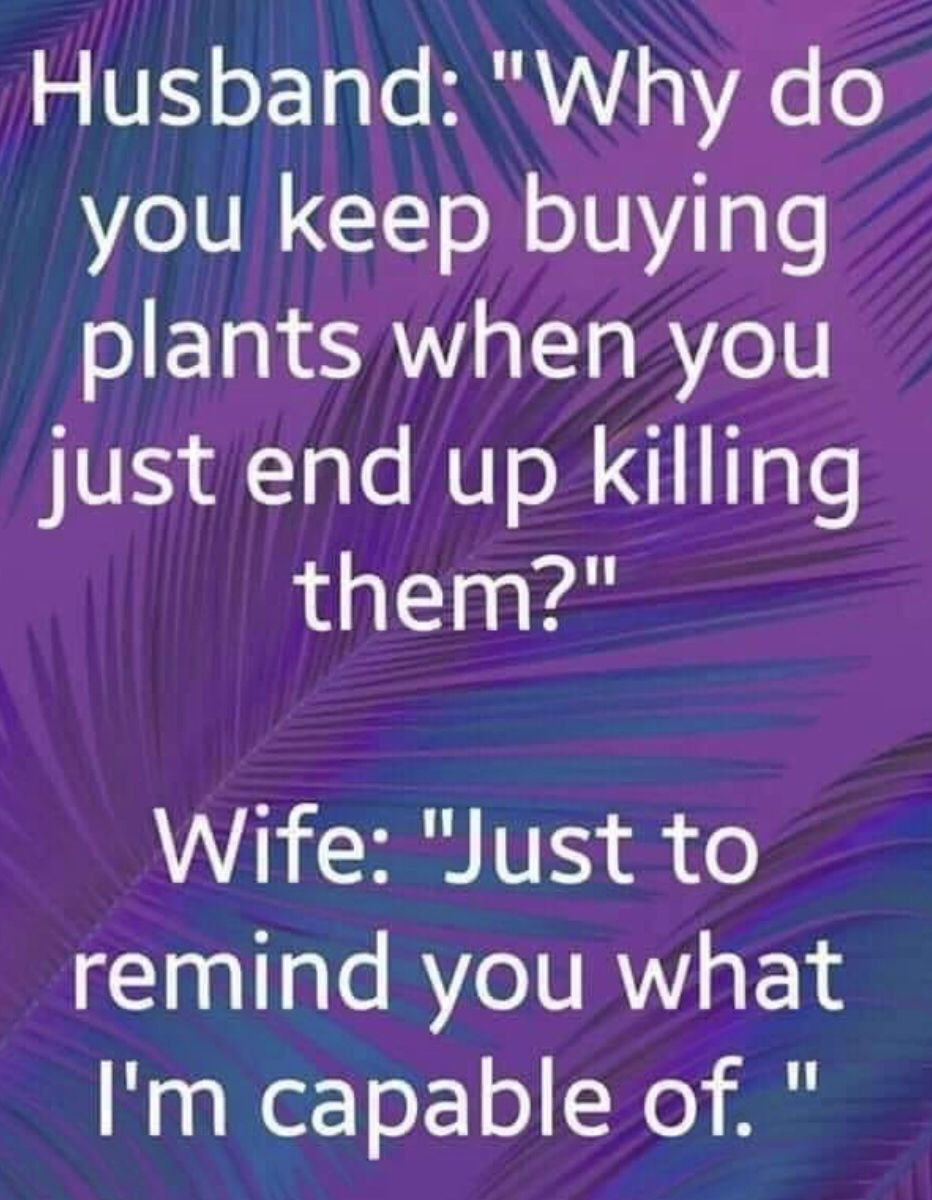 Pin By Susan Burgess On Humor Funny Quotes Sarcastic Quotes Funny Silly Jokes