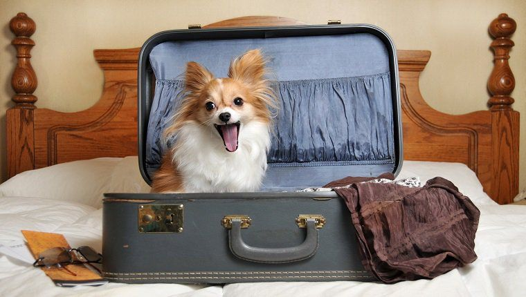 Top 32 Small Dogs Who Make Good Apartment Dogs | Dog ...