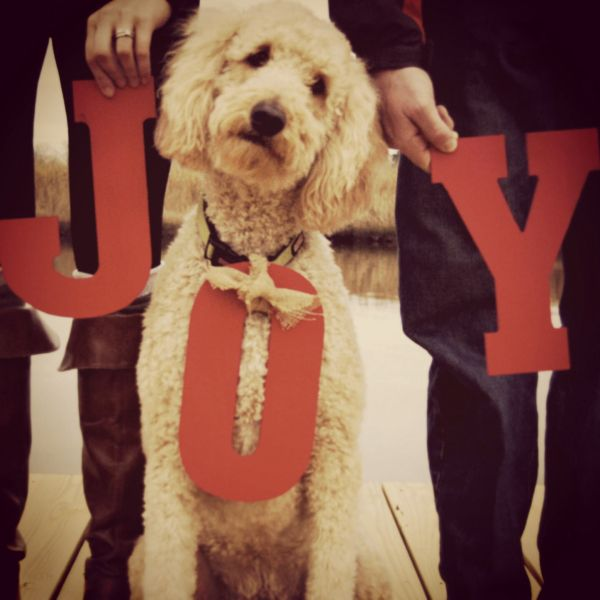 Dog Christmas Card Photo.27 Holiday Cards That Prove Your Dog Is Family Too