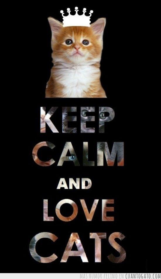 Keep Calm And Love Cats Keep Calm Keep Calm Quotes Keep Calm Pictures Keep  Calm Images Keep Calm Sayings