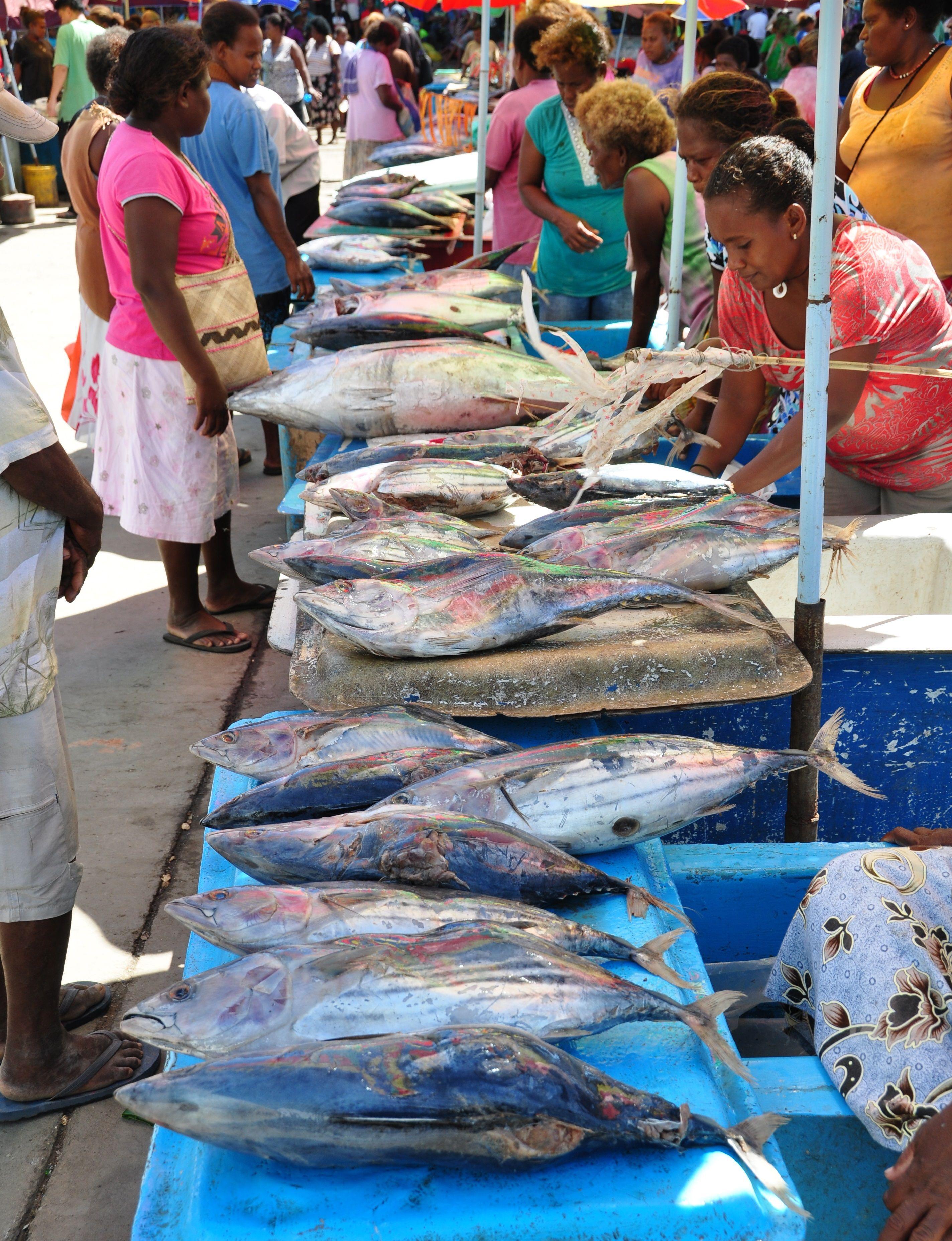 Tuna for sale at seafood market in Honiara, Solomon Islands