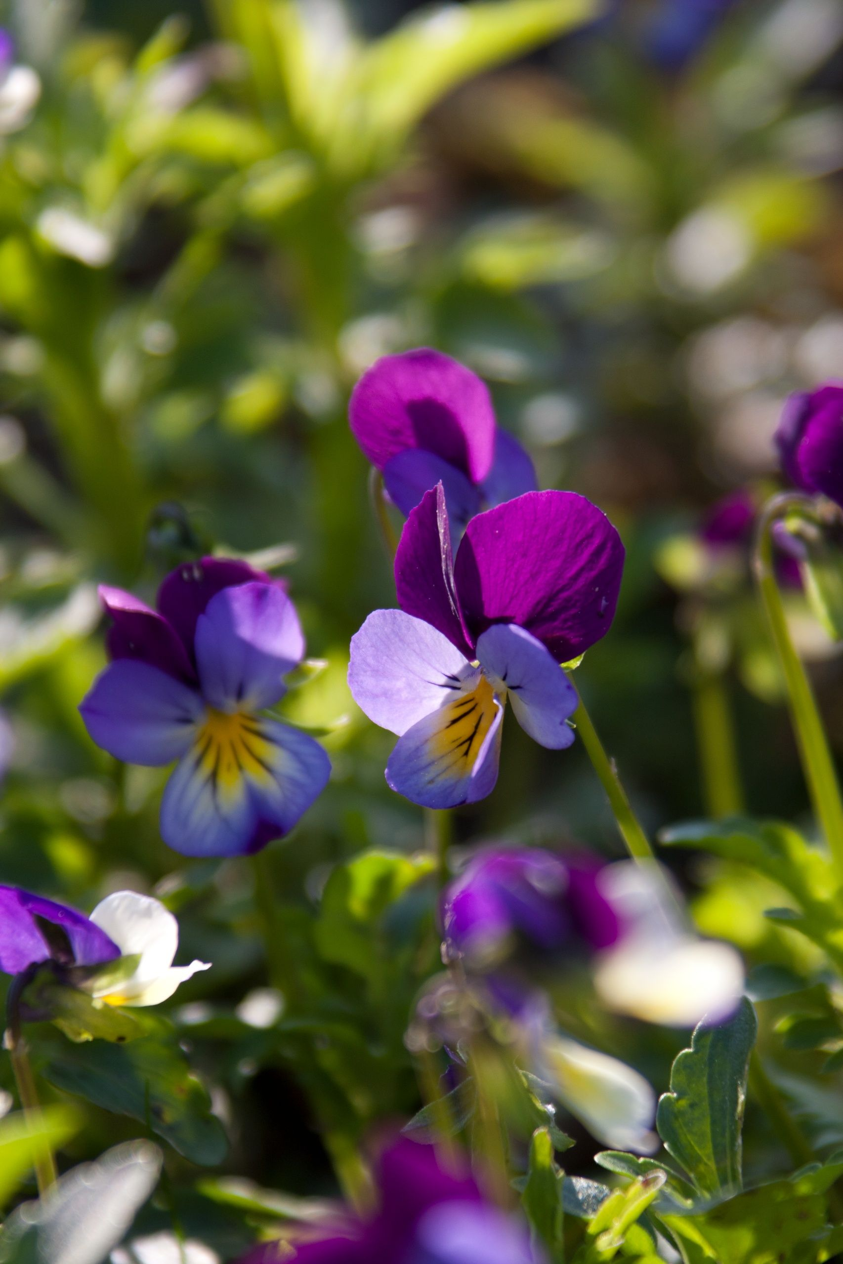 Dr Hauschka Colorful Flower Beds Nature Garden Pansies