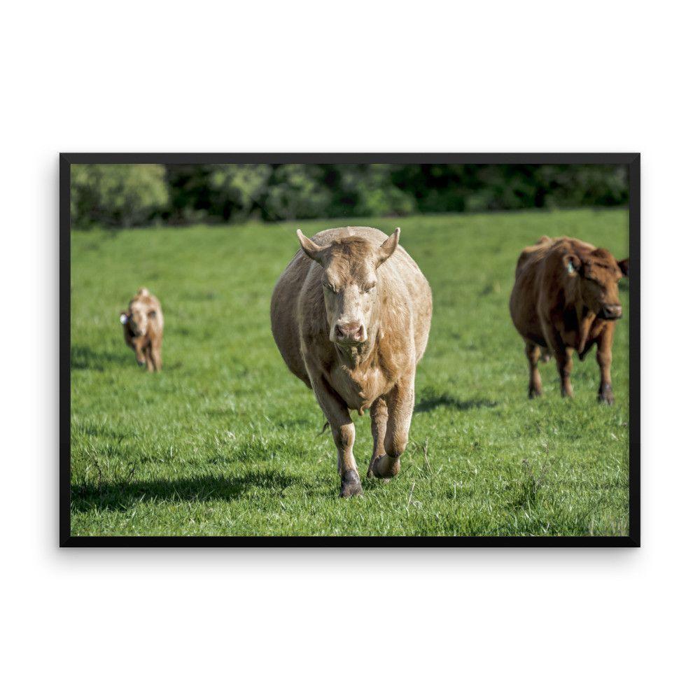 Bull Framed photo paper poster