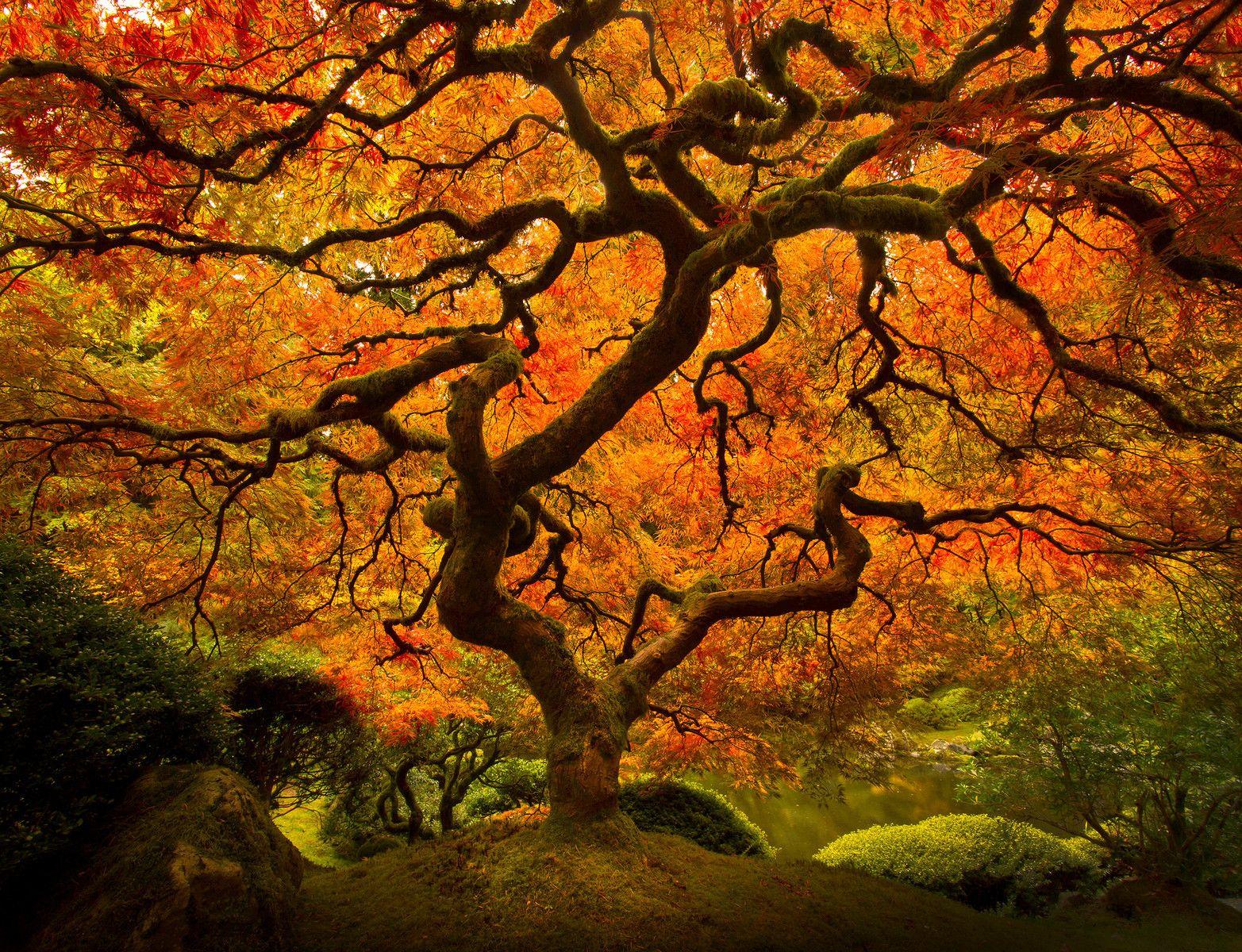 Lijah Hanley Photography Portland japanese garden