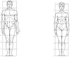 El Encaje Y Proporciones Del Cuerpo Humano Buscar Con Google Proporciones Del Cuerpo Humano Cuerpo Humano Clases De Dibujo