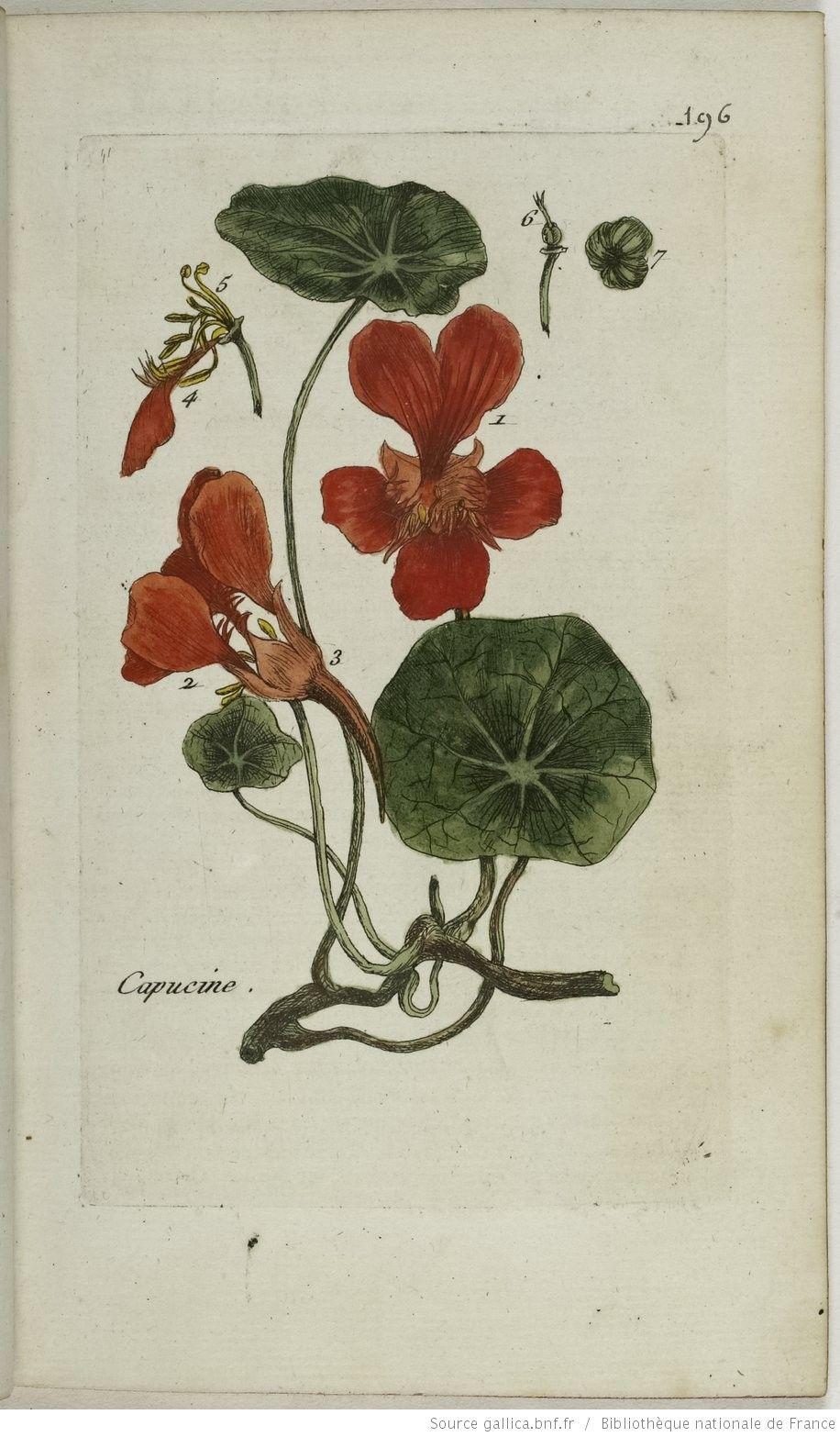 Flora Parisiensis Ou Description Et Figures Des Plantes Qui