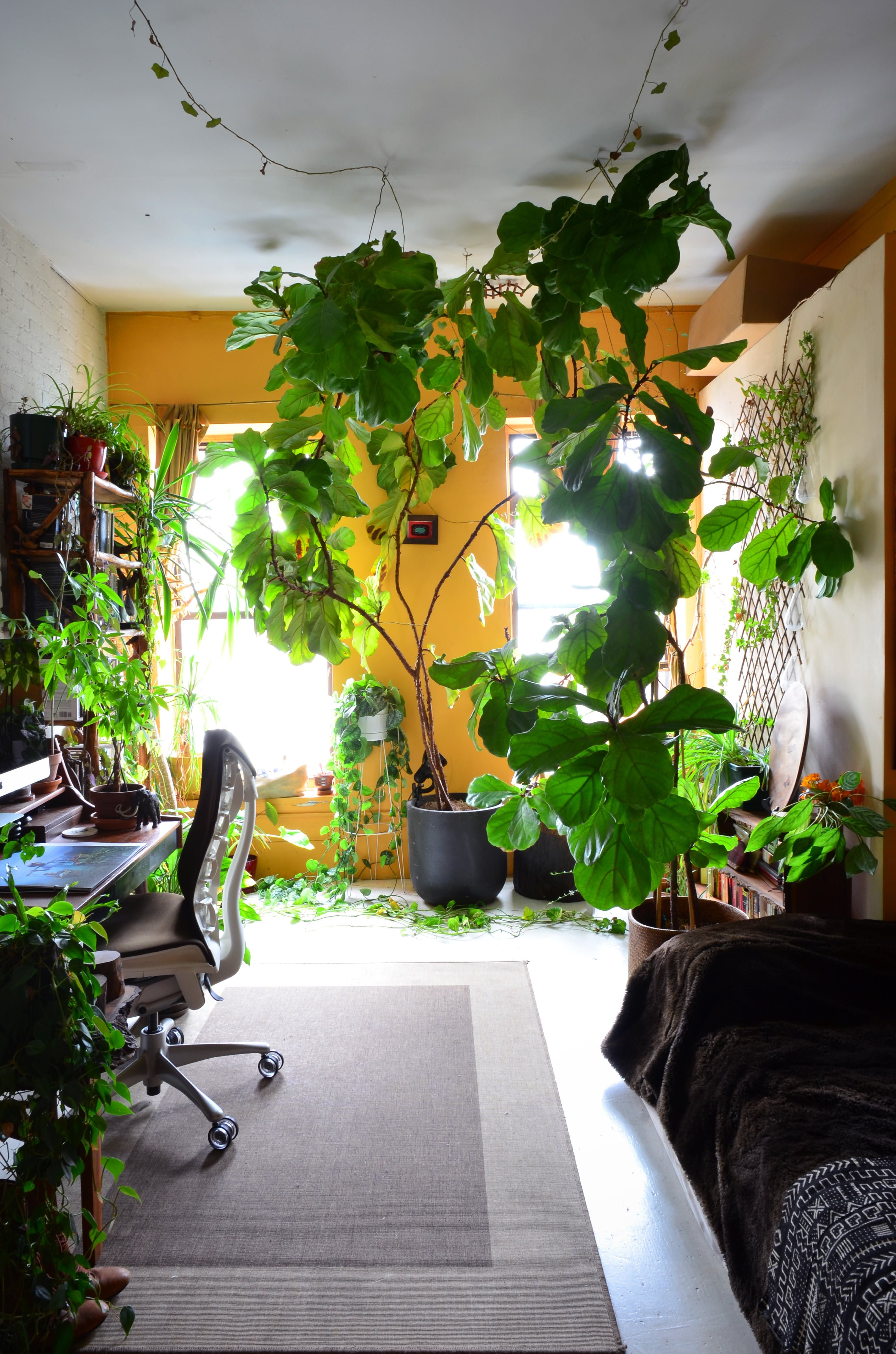 An Indoor Jungle Grows in a Brooklyn Apartment  Indoor