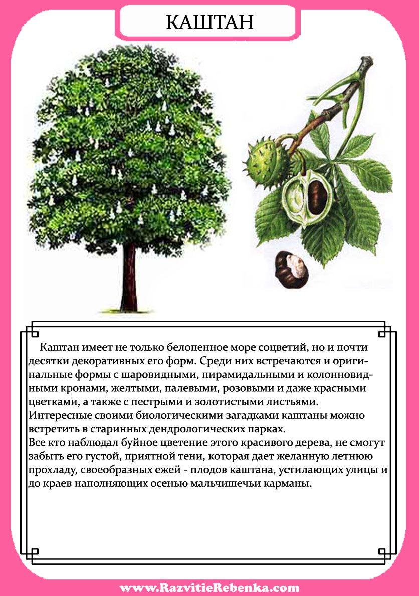 устанавливается рассказ о дереве с картинками собраны