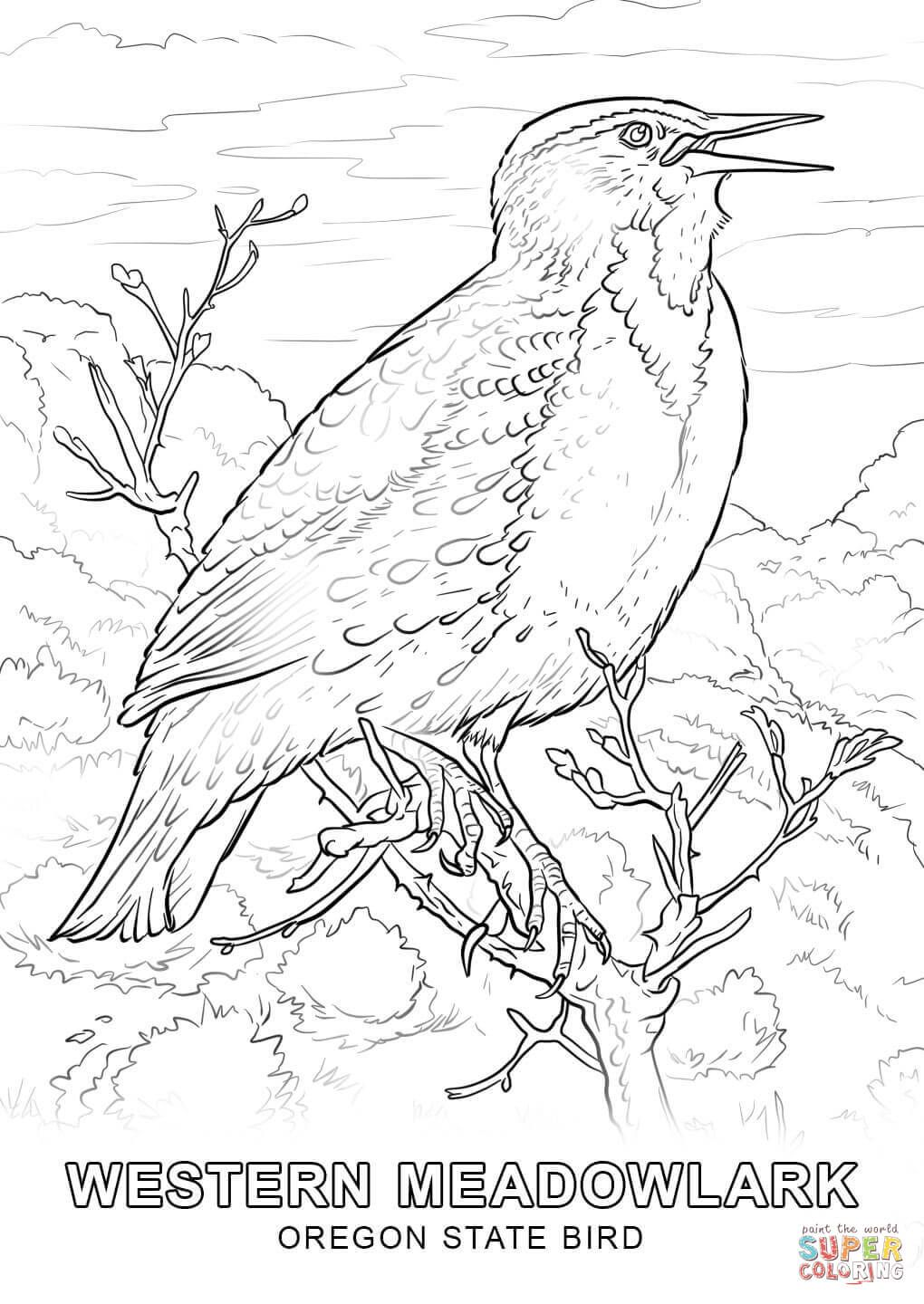 Coloring Flower Oregon Pages State 2020 Bird Coloring Pages