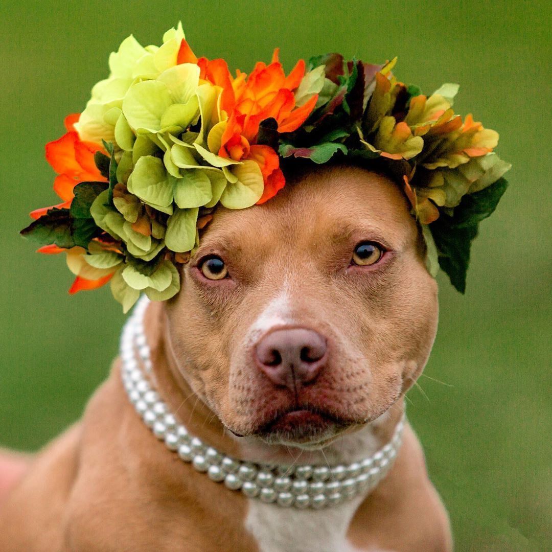 Lady Kenzie is a dog up for adoption in the Washington