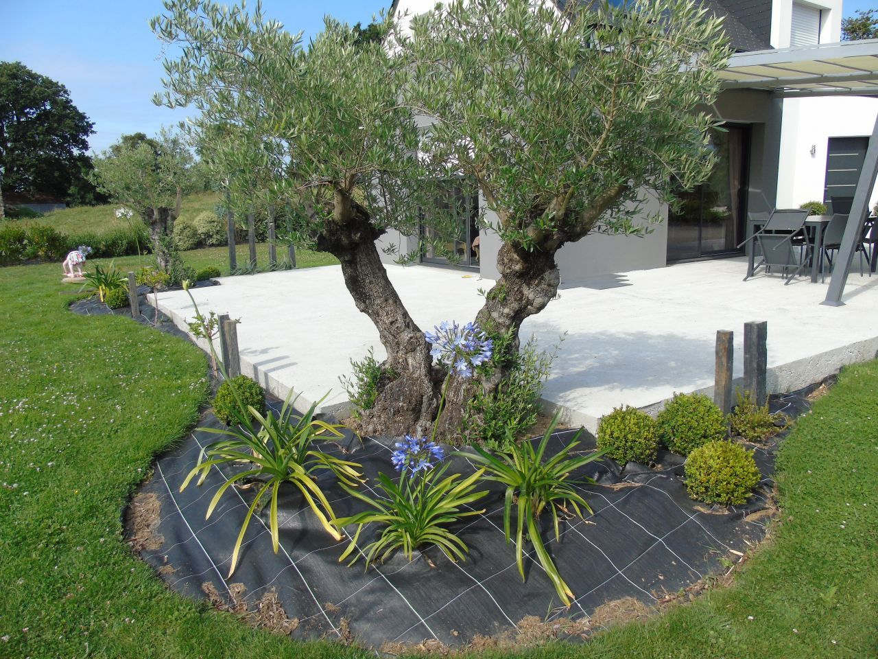 végétaux - plantation - haies][] olivier - angey (manche - 50