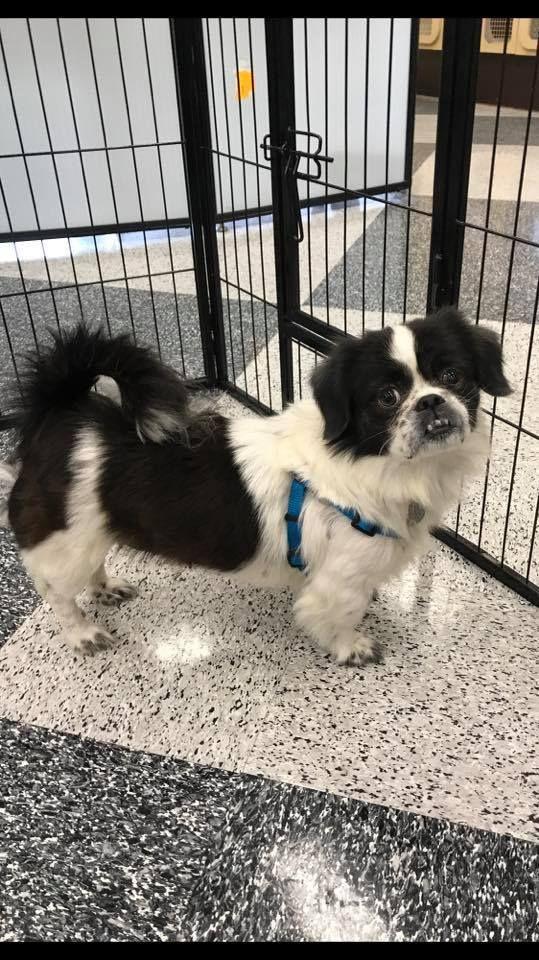Adopt Venus on Petfinder Animal shelter, Poor dog, Cat