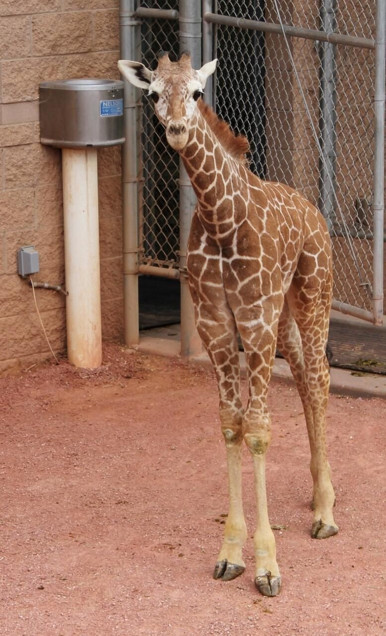 Twitter / CheyenneMtnZoo: Our staff has chosen the name ...