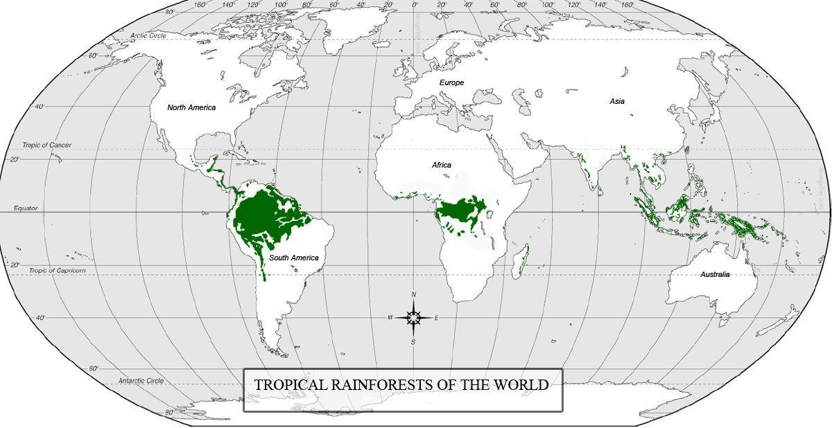 world map rainforests graphic - Google Search Sweet Addiction - fresh world map quiz practice