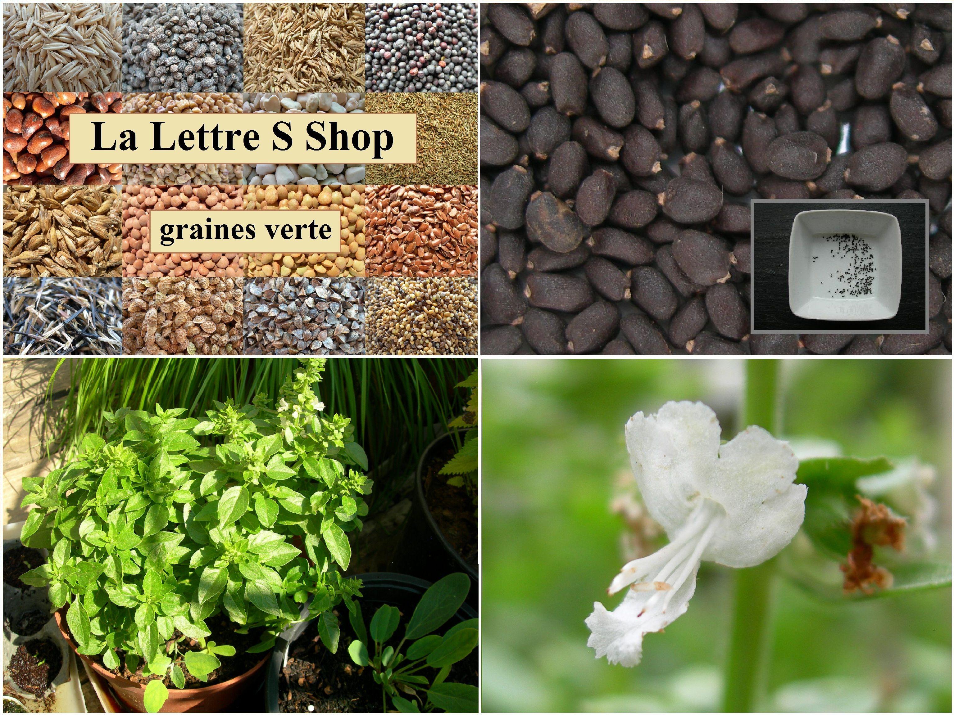 Greek Summer légumes//verts Graines pack de la Grèce Heirloom organique non OGM