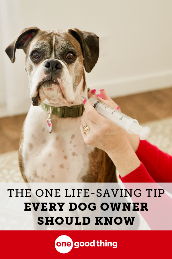 The One Life Saving Tip That Every Dog Owner Should Know Dog Owners Dogs Dog Throwing Up