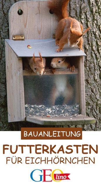 Wenn ihr einen geeigneten Futterkasten für Eichhörnchen selbst bauen möchtet, haben wir die passende Bau-Anleitung für euch! #basteln #bastelnmitkindern #eichhörnchen #garten #gartenprojekt #bastelidee #bastelnmitholz