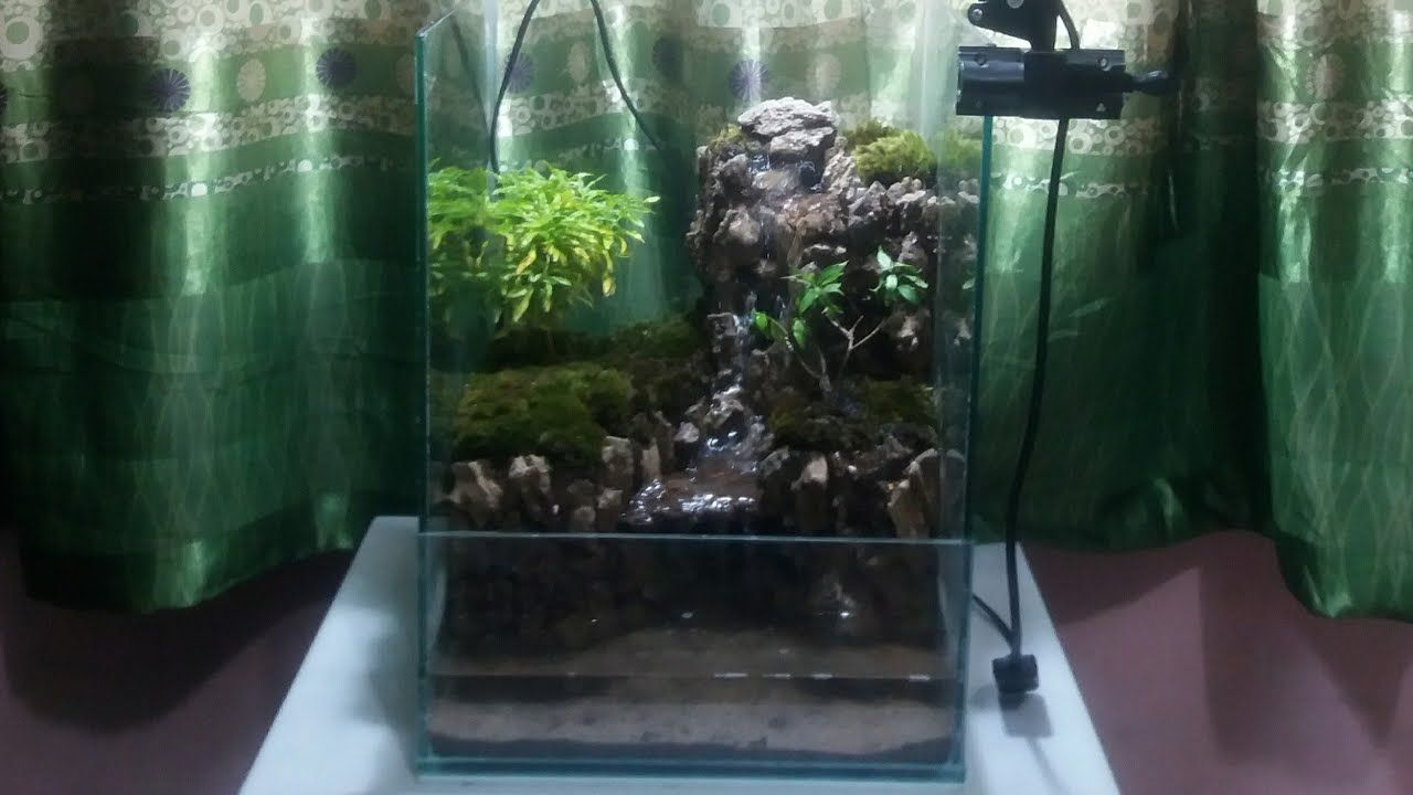 Cara Membuat Paludarium Air Terjun Sederhana Dan Murah Make Aquaterrarium Waterfalls Simple Paludarium Aquascape Aquaterrarium