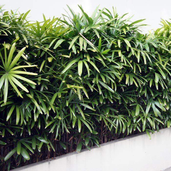 Retro Plants 1950 S Secret Gardens Of Sydney Tropical Landscaping Landscaping Plants Low Maintenance Plants