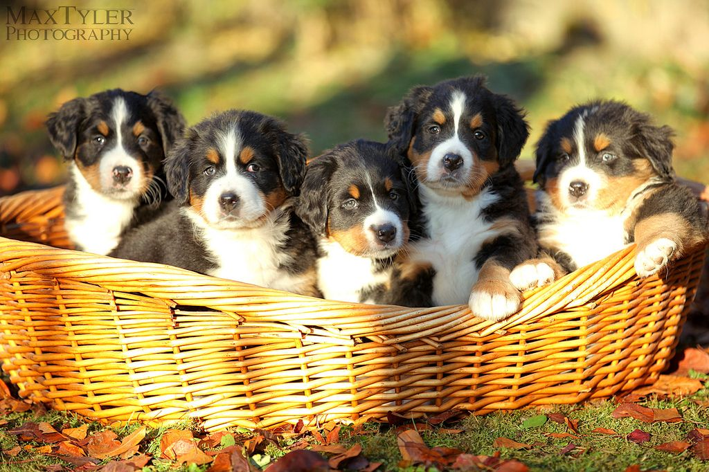 Baby Puppies Embrace pet insurance, Dog insurance, Cat