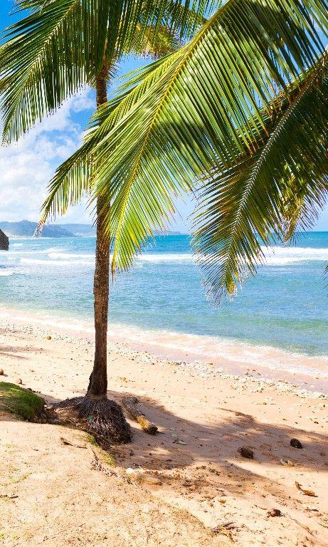 The 24 Best Island Beaches In The World Con Immagini