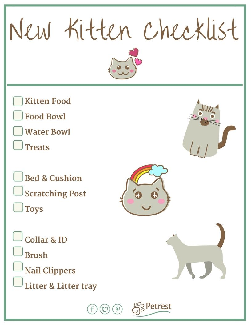 New Kitten Checklist Petrest beestjes Pinterest