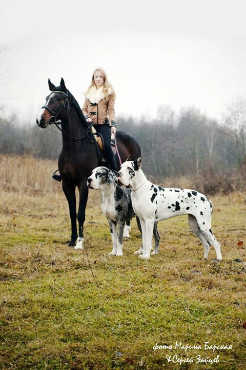 This Will Be Me With My Harlequin Gd My Warmblood Or Draft Horse