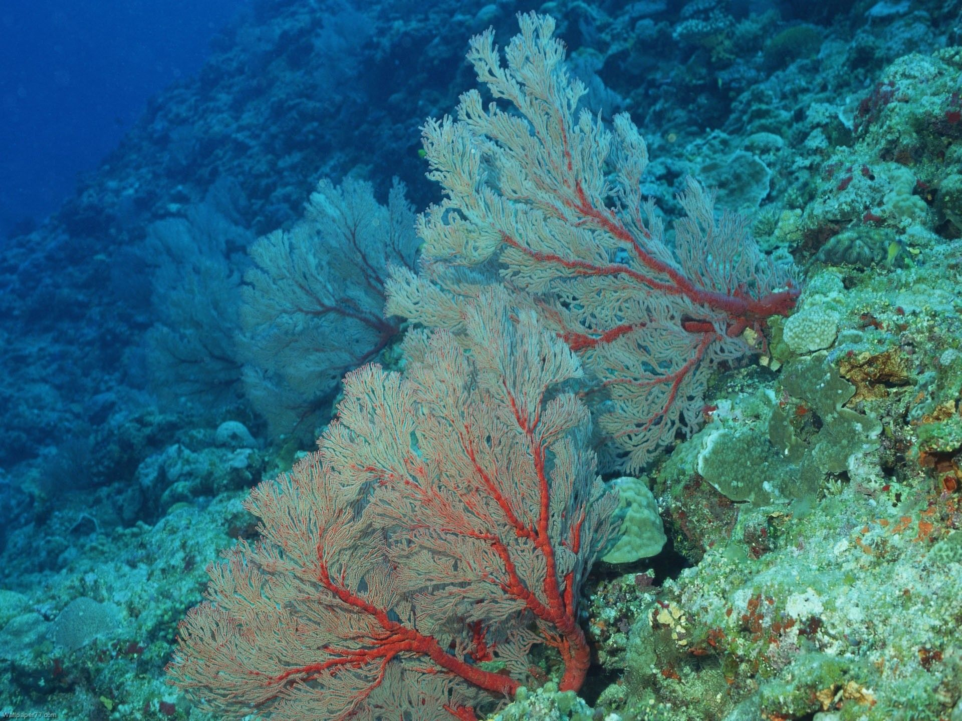 Sea coral sea coral tree underwater sea ocean water coral wallpapers 1920x1440 sota el - Sea coral wallpaper ...
