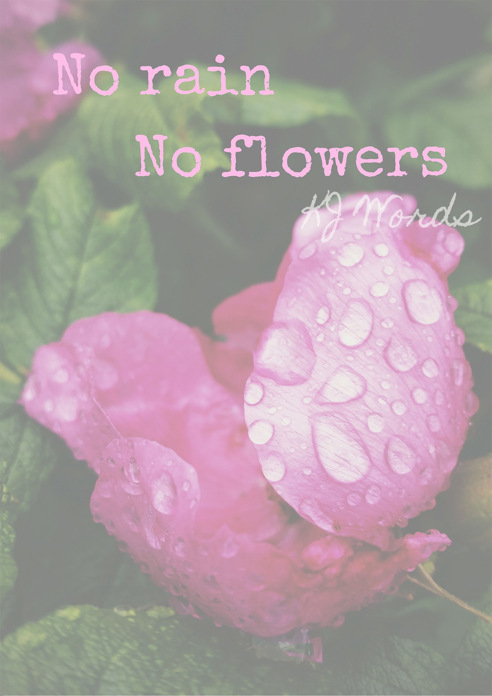 No Rain No Flowers Motivational Beautiful Quote Roses Flowers