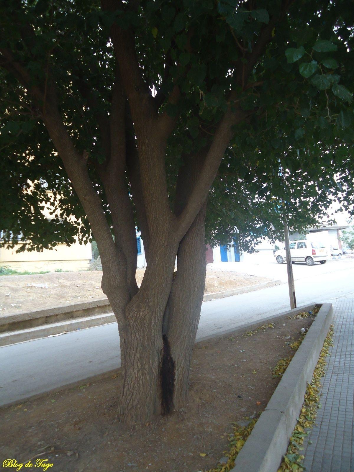 التوت ق مجلة Tagemagazine مجلة تاج Plants Tree Tree Trunk